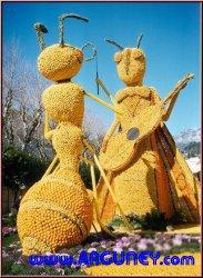 Limon Festivali