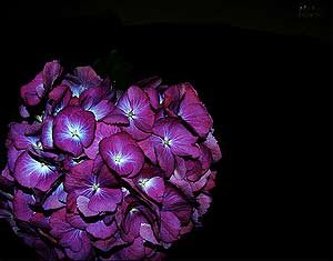 Siz hangi çiçeksiniz