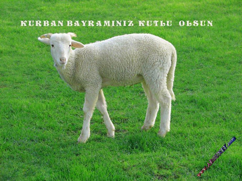Kurban Bayramý