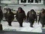Þemame çeken Maymunlar