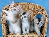 Kedi severlere özel