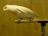Zikir Ceken Papagan