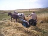 Çiftçi ilkel metoda geri dönüyor