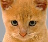 Kediye saygýsýzlýktan suçlular