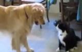 Bir Dostluk Hikayesi