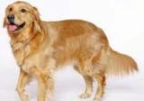 Köpekle yürüyüþ spordan iyi