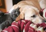 Köpekler kedileri pati farkýyla geçmiþ
