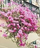 Güzel balkonlar için...