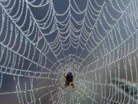 Örümcek aðý
