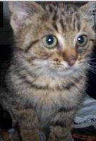 ücretsiz yavru kedi