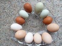 Yumurta kabuðu kalsiyum